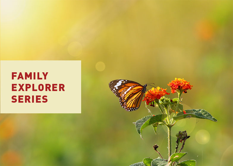 Family Explorer Series at Canyon Falls Community - Butterfly Talk Event 2018