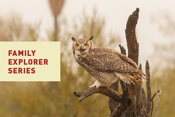 Family Explorer Event Series at Canyon Falls | Raptors of North Texas
