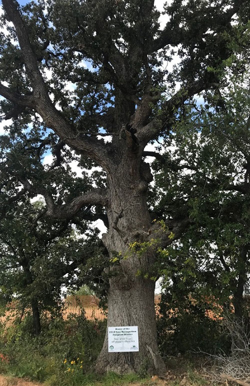 2018 Flower Mound Tree of the year at Canyon Falls Community